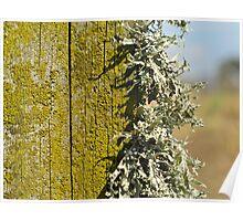 lichen post Poster