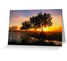 Buttercup Sunrise Greeting Card