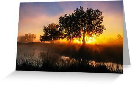Buttercup Sunrise by nikongreg