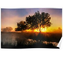 Buttercup Sunrise Poster