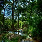 Creek Trees by Gary Bergeron