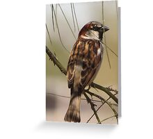 House Sparrow (Male~Breeding Plumage) Greeting Card