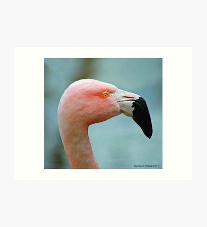 Let's Do The Flamingo Art Print