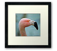 Let's Do The Flamingo Framed Print