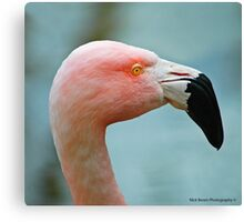 Let's Do The Flamingo Canvas Print