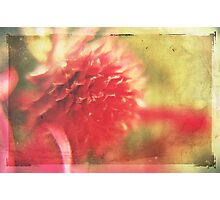 Paradox Photographic Print
