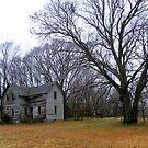 Tall Oaks Estate by wiscbackroadz