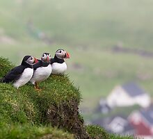 Three Puffins by cloud7