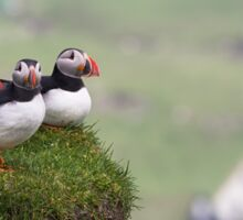 Three Puffins Sticker