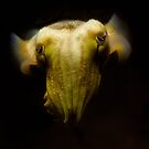 Cuttlefish by tarnyacox