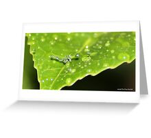droplet dance Greeting Card
