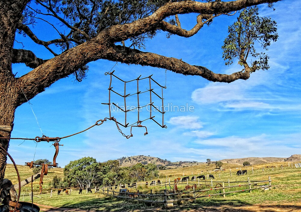 Hanging around the farm on a sunny day by Maree Cardinale