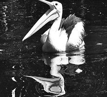 Happy Pelican by Keri Buckland