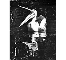 Happy Pelican Photographic Print