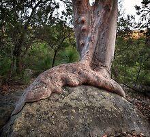 (Gum)Tree beats Rock by Jason Ruth