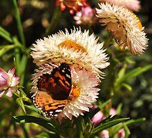 Butterfly in wildflower garden by Keri Buckland