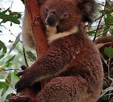 Happy Koala by Keri Buckland