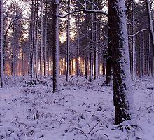 Mystical Winter by Jonathan Wicks