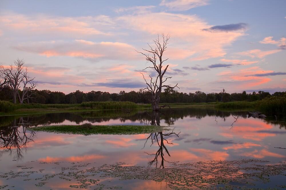 Wonga Wetlands Sunset by Cameron B