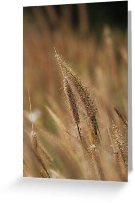 I love Grass. by newcastlepablo