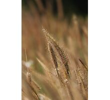 I love Grass. Photographic Print