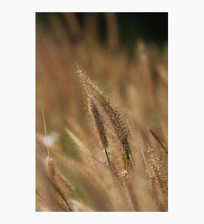 I love Grass. Photographic Print