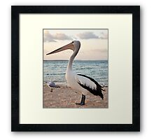 Pelican, Monkey Mia Beach Framed Print