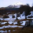 Ushuaia Natural Park at Winter Sundown by Sue Ballyn