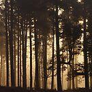 Woodland Sunrise Panorama by Ann Garrett
