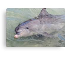 Happy Dolphin Canvas Print