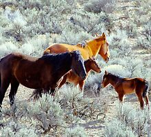 Two Wild Foal With Mom's by SB  Sullivan