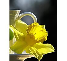 A Jonquil Morning Photographic Print