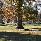 Fall in the Park by pixhunter
