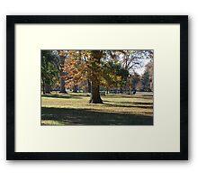 Fall in the Park Framed Print