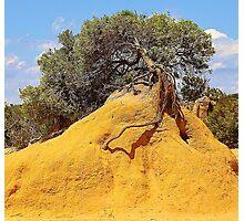 Tree Mound Photographic Print