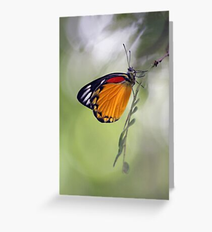 The Butterfly Effect. Greeting Card