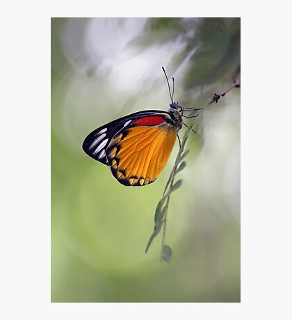 The Butterfly Effect. Photographic Print