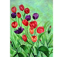 Tulips in the garden Photographic Print