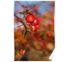 Crab Apple Bright Poster