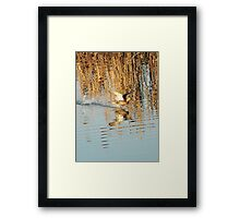 flying over the water Framed Print
