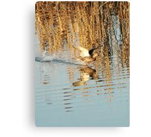 flying over the water Canvas Print