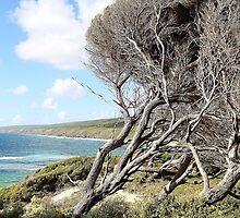 Windswept tree, Yallingup by Keri Buckland