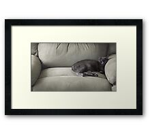 The Tiny Queen Of The Big Chair Framed Print