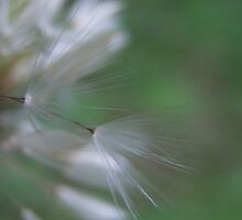 Wisp's On The Wind by Tracy Faught