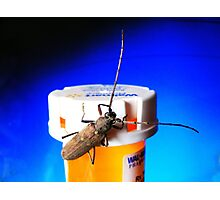 Bug on Drugs (:>) Photographic Print