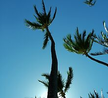 Tropical palm by Helen Carmichael