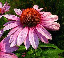 Pink Cone Flower by Christian  Bennion