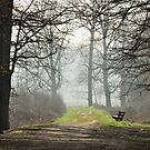 The sunshine bench is waiting for spring by jchanders