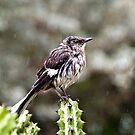 Wet Bird by martinilogic