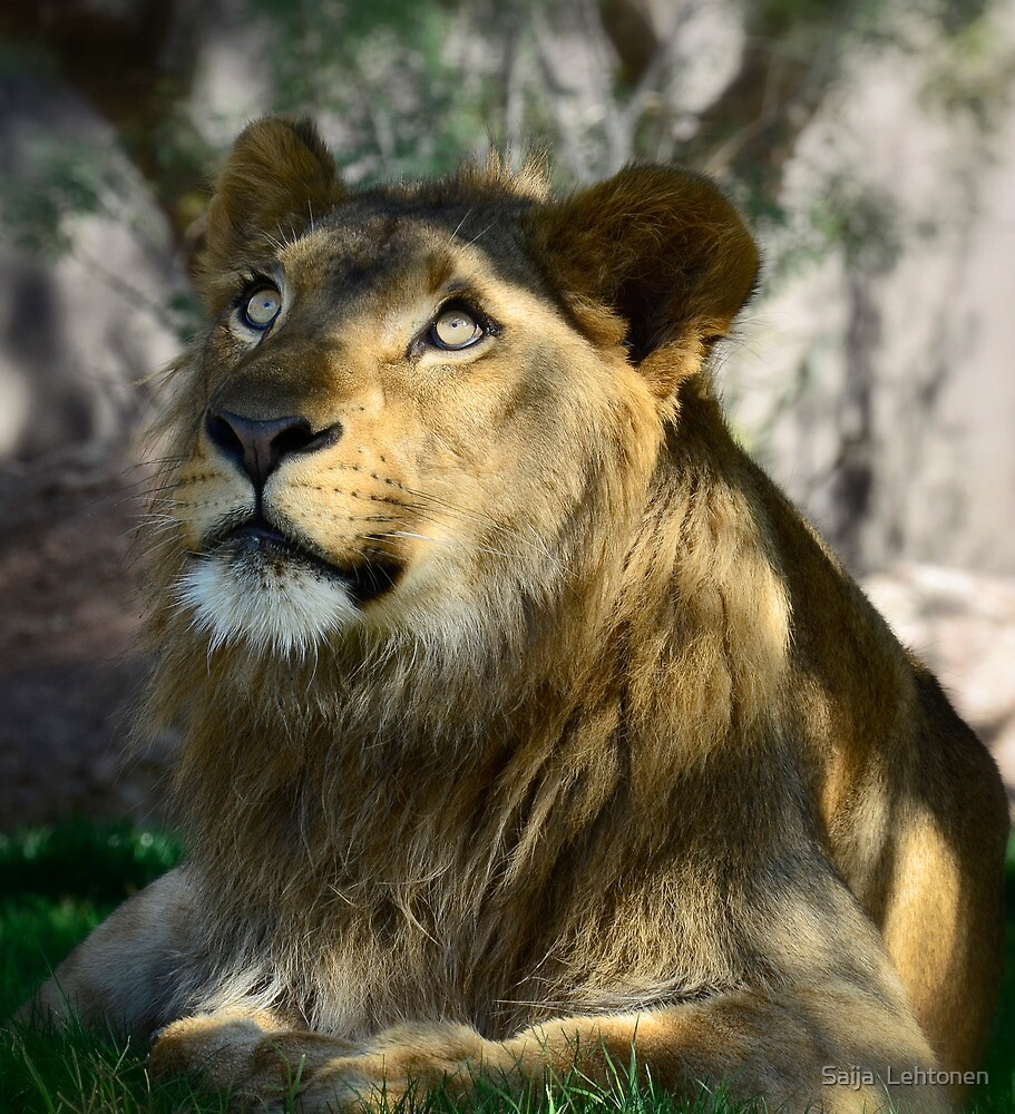 A King in Training  by Saija  Lehtonen